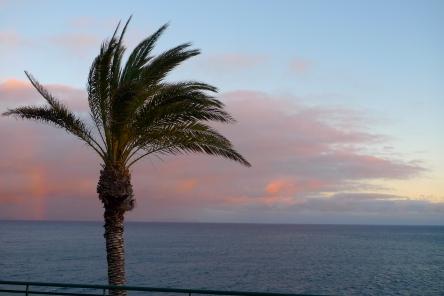 Wie eine Palme im Wind ...